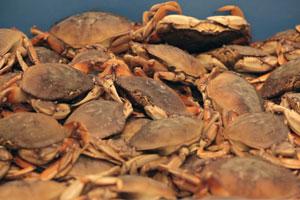 crabs-thumb